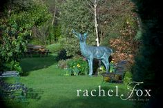 Our gardens in March In The Heart, Beautiful Gardens, Acre, Woodland, Animals, Animales, Animaux, Animal, Animais