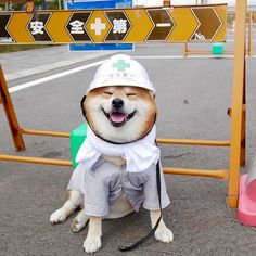 workin' hard or hardly workin'? Cute Funny Animals, Funny Dogs, Shiba Inu Doge, Animals And Pets, Baby Animals, Cute Puppies, Dogs And Puppies, Japanese Dogs, Cute Dogs Breeds