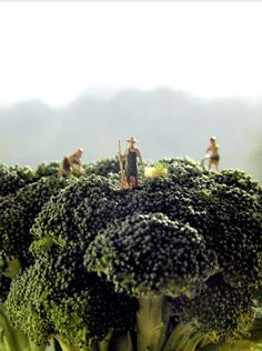 Broccoli farmers, working hard for you. #tinypeople