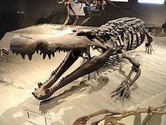 Deinosuchus hatcheri - Natural History Museum of Utah - DSC07251.JPG