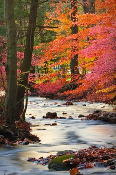 Forest Stream, Middlefield, Connecticut, US(by enfi)