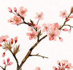 Pink blossom of prunus Original watercolor painting botanical art flower art floral painting Cherry Blossom Watercolor, Cherry Blossom Art, Watercolor Flowers, Watercolor Paintings, Original Paintings, Japanese Cherry Blossoms, Japanese Watercolor, Flower Paintings, Japanese Flowers