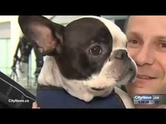 Piloto desvía vuelo internacional para salvar un perro | Mascoperros #mascotas #perros #actualidad #noticias