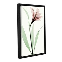 Lark Manor Lily II Framed Graphic Art on Wrapped Canvas Size: