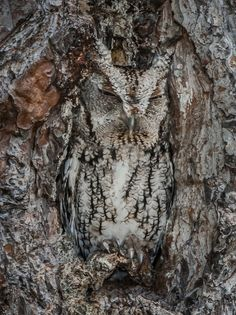 Sleeping owl, love how he blends with the tree.