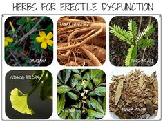 Herbs for Impotence or Erectile Disfunction (ED) Treatment