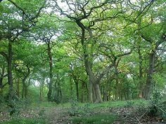Sherwood Forest, Nottingham, England