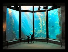 The Kelp Forest exhibit at the Monterey Bay Aquarium (photographer Ed Bierman) - http://www.discover-central-california.com/photo-of-the-week.html