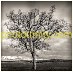 Tree in Winter -   Simple, elegant and inspiring image of a tree produced in mono to influence the viewers eye toward the dormant nature of the tree. One of the most powerful motifs in landscape photography is that of the lone tree, standing tall, proud and defiant.Trees are incredibly photogenic, at any time of the year.The bare twisted branches of the winter tree set against a dark sullen sky makes a great subject for black and white.