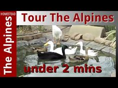 Tour in less than 2 minutes - The Alpines Homestead