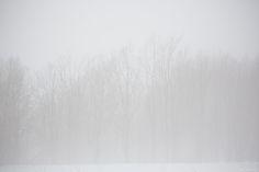Thick Fog. May 2015 Southern Lapland, Finland.by Tiina Törmänen | web | FB | IG |