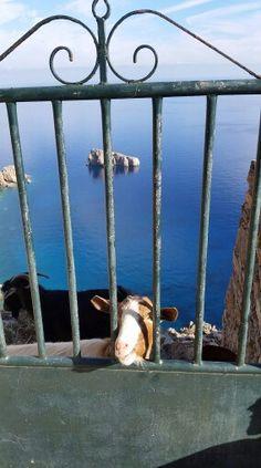 Amorgos Isl, Greece What A Country, Country Maps, Santorini Villas, Myconos, Greek Sea, House By The Sea, Greece Travel, Ancient Greece, Greek Islands