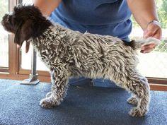 Jake's new puppy?