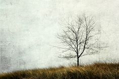 """""""Tree Minimalism"""" - Part of the Texture Series from 7:10 Studio Photography."""