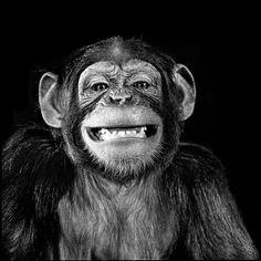 Böse Affen Animals Beautiful, Cute Animals, Monkey Pictures, Animals Black And White, Monkey Art, Elephant Art, Mundo Animal, Orangutan, White Art