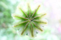 Flower From My Garden #65