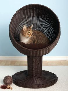 Give your cat a comfy perch with this Kitty Ball Bed. Cats are naturally inclined to elevate, which is why this nest is perfect for your feline friend: it's off the ground but still easy to reach for older pets. And the clean lines will artfully complement your decor.