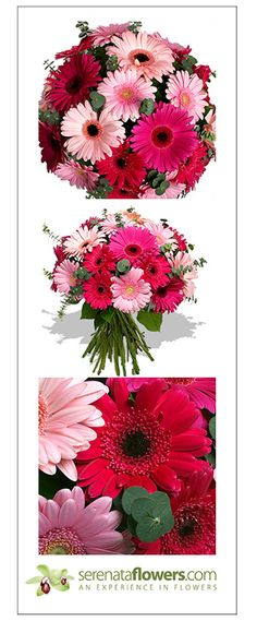 """Summer Breeze"" flower bouquet #gerbera #germini #summer #flowers"