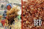 Quinoa's Dark Secret   TakePart