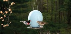 egg bird feeder.jpg