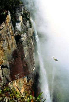 Out That You're More Capable Than You Thought - Base jumping em Angel Falls, Venezuela. signtendenc… -Finding Out That You're More Capable Than You Thought - Base jumping em Angel Falls, Venezuela. Angel Falls Venezuela, Escalade, Base Jumping, Paragliding, Skydiving, Adventure Is Out There, Plein Air, Adventure Awaits, Rock Climbing