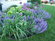 Walkers Low Catmint, hosta, etc.