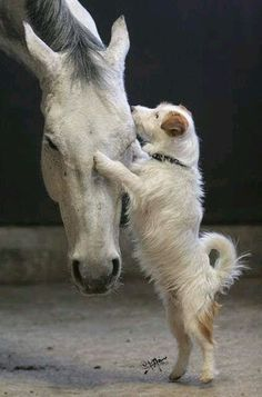 Just horsing around and giving some love❤❤