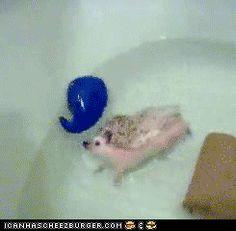 Funny Animal Gifs - Animal Gifs: Do A Barrel Roll!