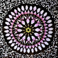 New Flower Mandalas by Kathy Klein mandala land art is it spring yet flowers Mandala Art, Mandala Design, Mandalas Painting, Mandalas Drawing, Flower Circle, Flower Petals, Flower Art, Circle Art, Land Art