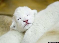 Awwwwww so cute!  The Science Of Cute: Is Pedomorphism Why We Gush Over 'Adorable' Things? (VIDEO)