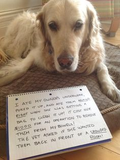 Dogshaming -- it's nice to know that my dogs aren't the only ones who do crazy stuff...and it's nice to know there are other people who love their dogs as much as I do and are willing to put up with it! LOL