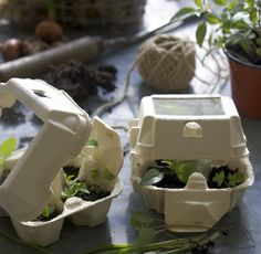 top of the egg carton cut out for light / plant stays warm