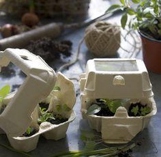 egg carton greenhouse?