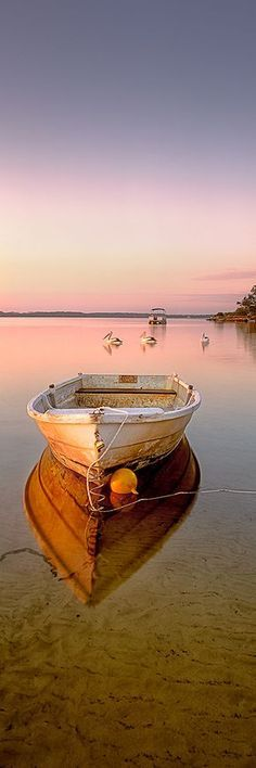 Three Pelicans float past and old dinghy in the still waters of the Pumicestone Passage, QLD