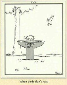 When birds don't read Far Side Cartoons, Far Side Comics, Good Cartoons, Funniest Cartoons, Funny Cartoon Memes, Funny Comics, Teacher Humor, Nurse Humor, Gary Larson Far Side