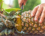 Sadenie mrkvy, hrachu, fazuľe, cibule či kalerábu – kedy a ako Ale, Pineapple, Fruit, Garden, Flowers, Food, Pinecone, Meal, Ale Beer