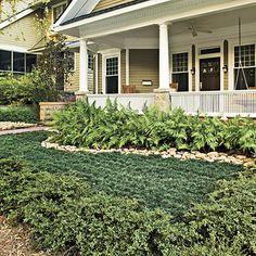 Evergreen No Mow Lawn: hardy ferns, dwarf mondo grass, Heller Japanese hollies & decorative stones to break up all that green