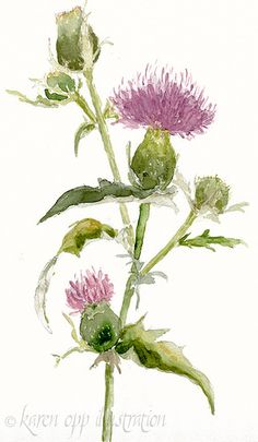 """watercolor thistle ... I personally like the clean white background and how you can """"see through"""" each color."""