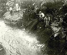 Seining Sockeye Salmon in Namu Creek c. Pacific Coast, Pacific Northwest, West Coast, Grizzly Bear Habitat, Salmon Run, Historical Images, Native Art, First Nations, British Columbia