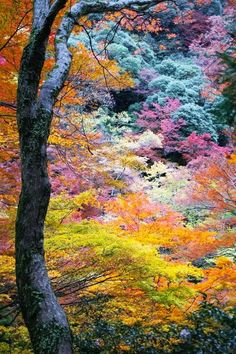 Amazing Japanese colorful fall