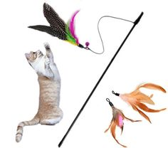 Itplus Kitten Pet Toy Interactive Chaser Training Rod Cat Catcher Feather Wand Fishing Pole Teaser with Two Feather Refill Replacement Style 1 ** Read more reviews of the product by visiting the link on the image.Note:It is affiliate link to Amazon.