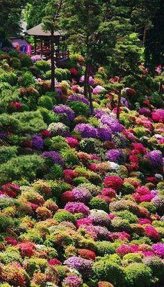 Interesting… Azaleas are smaller in Japan? Azaleas in full bloom - Shiofune Kannon Temple, Ome, Tokyo, Japan Beautiful World, Beautiful Gardens, Beautiful Flowers, Beautiful Places, Beautiful Gorgeous, Fresh Flowers, Colorful Flowers, Amazing Places, Absolutely Stunning