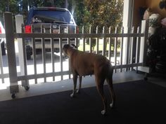 Perfect Pet Friendly Gates For The Garage! Mobile And Cute Curb Appeal! Outdoor