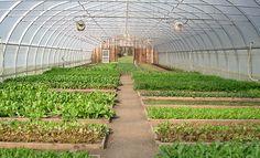 SWOON. White Gate Farm. Greenest. Greatest.