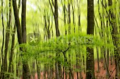 """hidden tree"" von Bernd Hoyen #fotografie #photography #fotokunst #photoart #digitalart #kunst #art #abstrakt #abstract #wald #wälder #forest #forests #baum #bäume #tree #trees #grün #green #natur #nature #deutschland #germany #saarland"