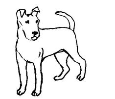 Fox-terrier coloring page