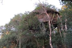 Marc's tree house, South Africa  #africantravels #treehouse