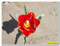 Balade dans les Alpes de Haute Provence - 6 avril 2014 - 105594210211807871865 - Picasa Albums Web