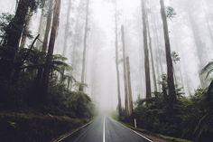 https://flic.kr/p/Liz7Jr | Black Spur | Victoria, Australia