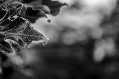 Forgotten #nature #black #white #photography #d5100 #nikon